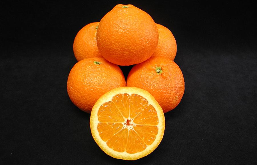 ANFIC-mandarin-Early-Sicily-C1867-fruit-tree-variety