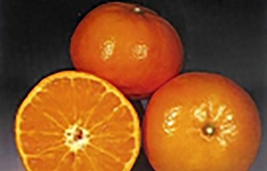 ANFIC-mandarin-mor