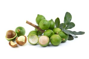 Macadamia Tree Varieties