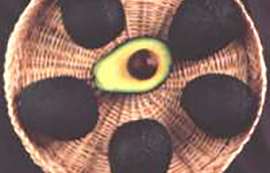 Lamb-Hass-avocado-fruit-tree-variety-anfic