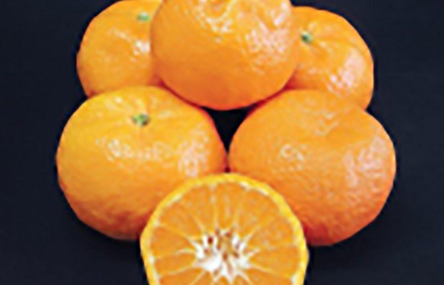 ANFIC Mandalate mandarin